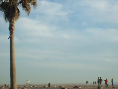 Huntington Beach palmier